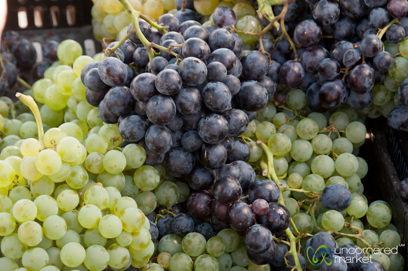 Grapes from the Douro Valley - Portugal
