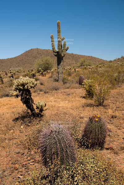 Phoenix Sonoran Preserve