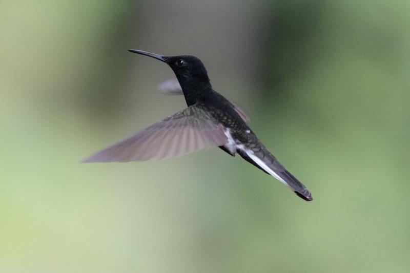 19-Sept Brazil Birds-8272.JPG