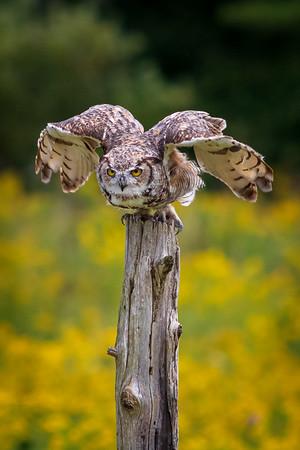 2019-09-15 Canadian Raptor Conservancy