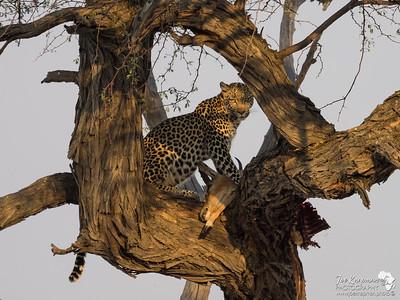The Predators from Chobe and Savuti 2016