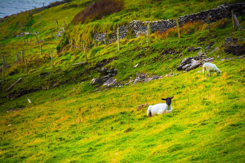 Ireland144.jpg