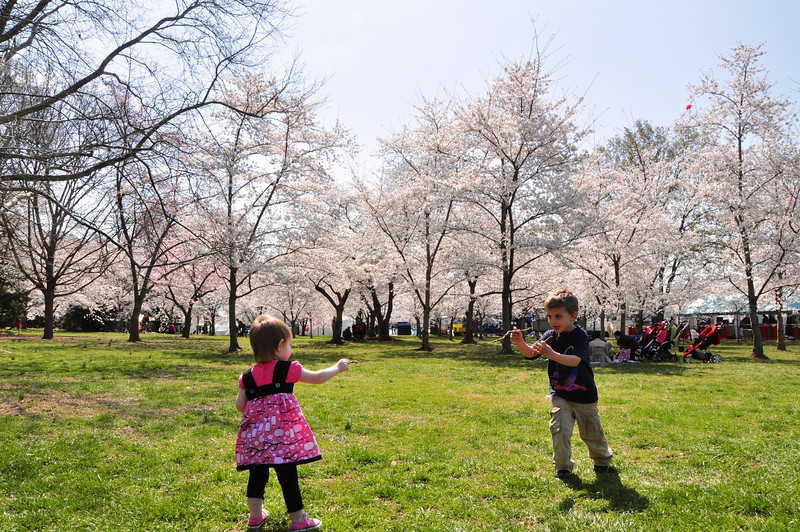 Cherry Blossoms 2014 042.jpg