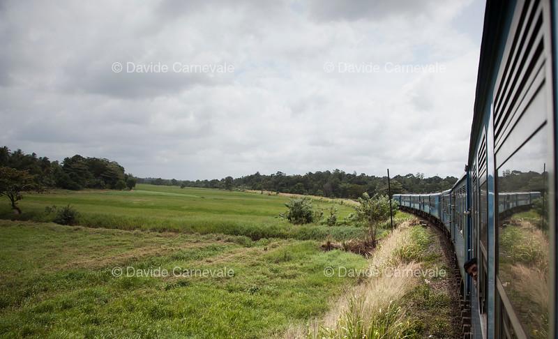 srilanka (10 di 74).jpg