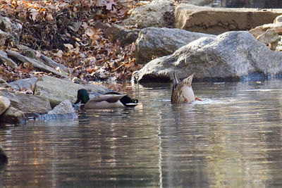 Bronx Zoo - Fall 2005