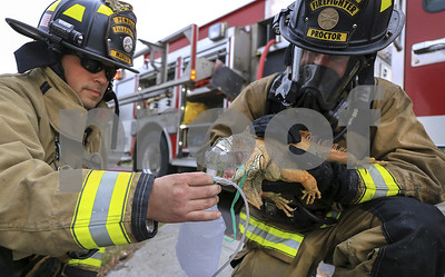 fire-crews-rescue-iguana-from-eastern-oregon-house-fire