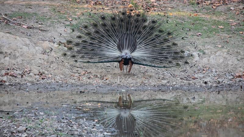 190415-165337-Nepal India-6918.jpg