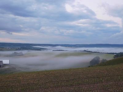 Morning Mist July 1