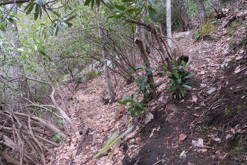 Laurel Knob Trail - 3,750'