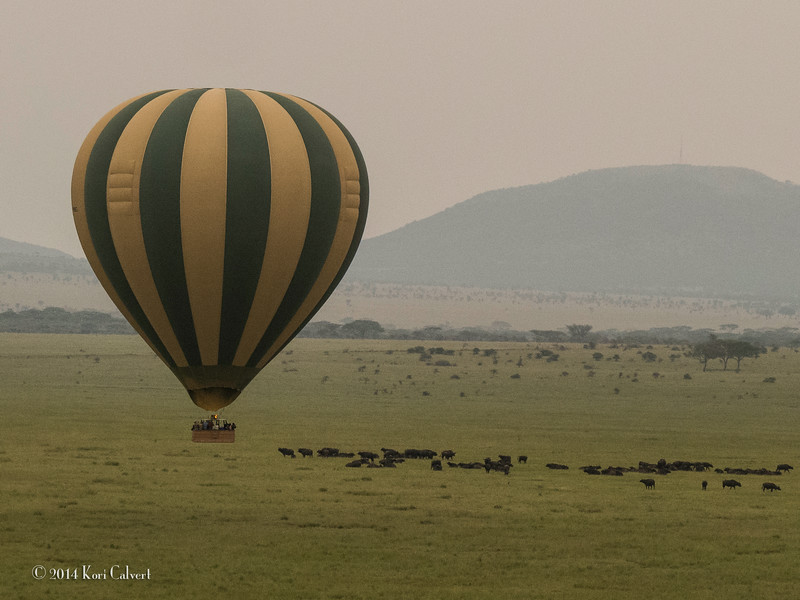 Water Buffalo&BaloonK-1.jpg