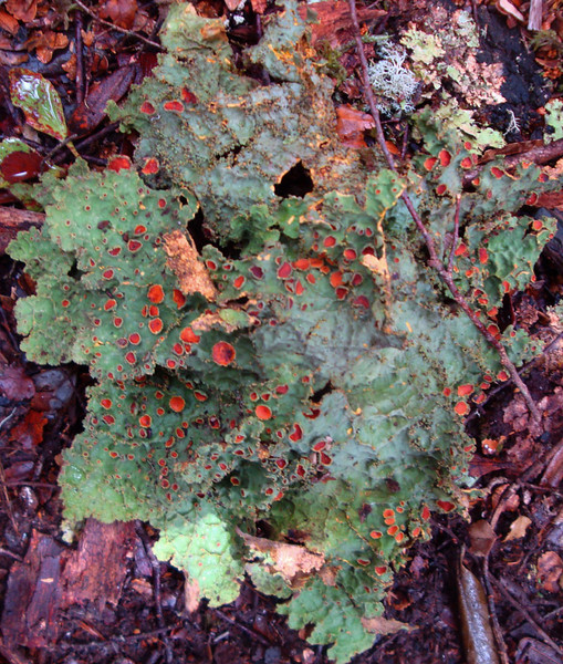And lichens.