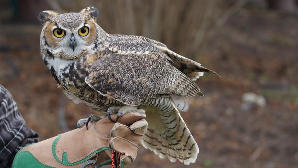 OwlMoon Sanctuary, Blackhill Nature Center, 2014