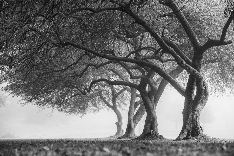 Twisted Tree Park Fog Landscape Pittsburgh.jpg