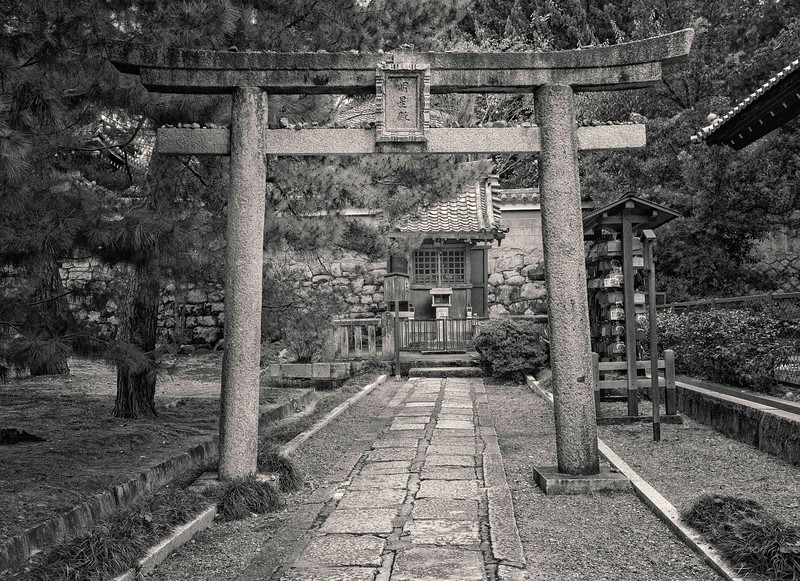 Kyoto Pines #4