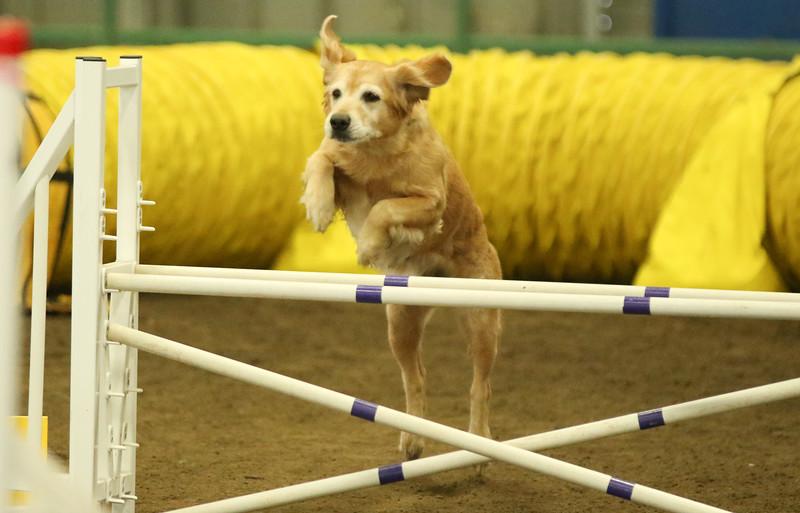 3-14-2016 Bloodhound-7640.jpg