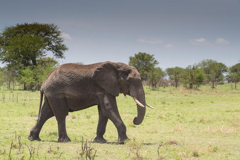 Africa  - 101116- 759.jpg