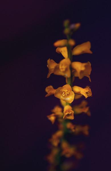 succulent flower-8496.jpg