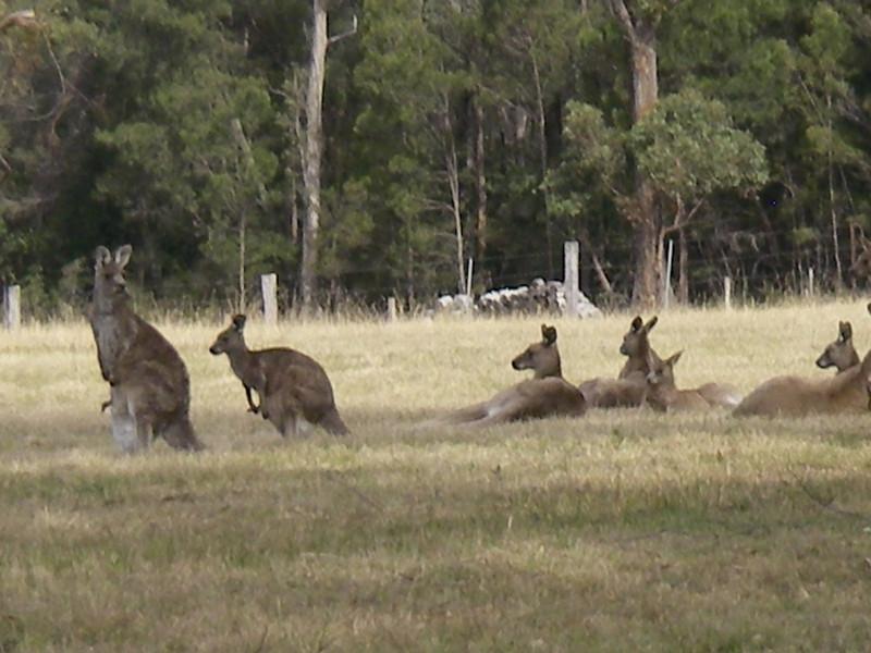 Sydney trip and Mirimbula 121.JPG