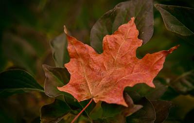 Autumn Leaves 2020