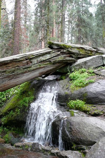 Congress Trail. Sequoia NP