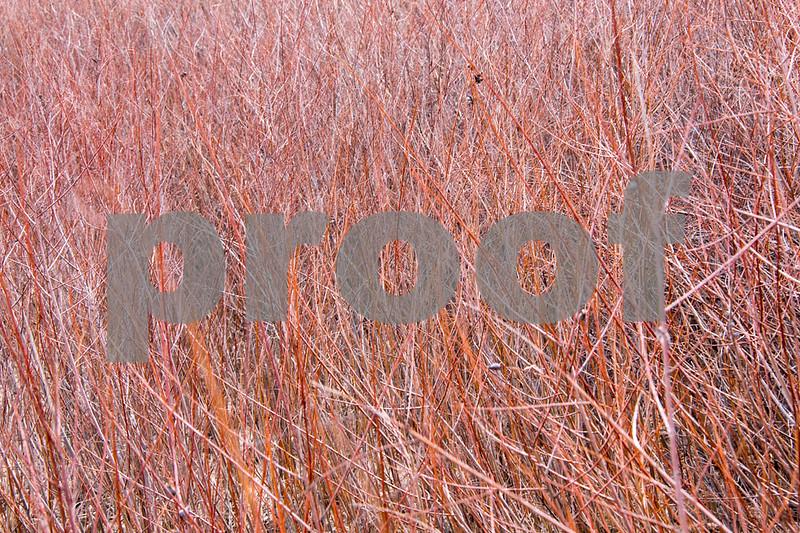 colorado brushes1.jpg