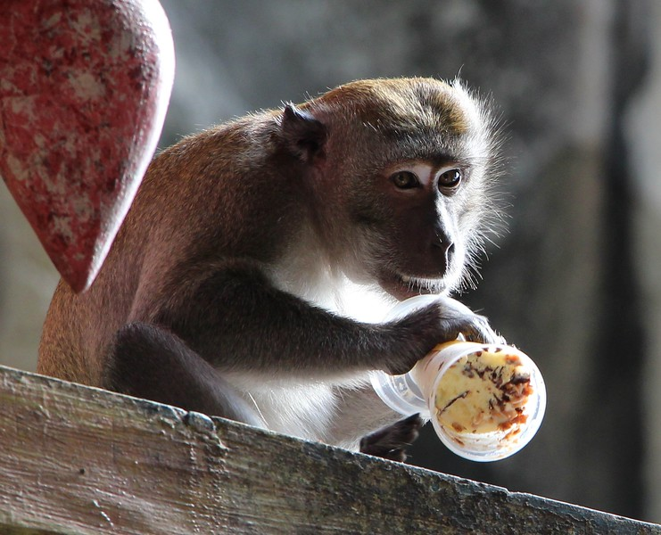 Batu_monkey_cropped
