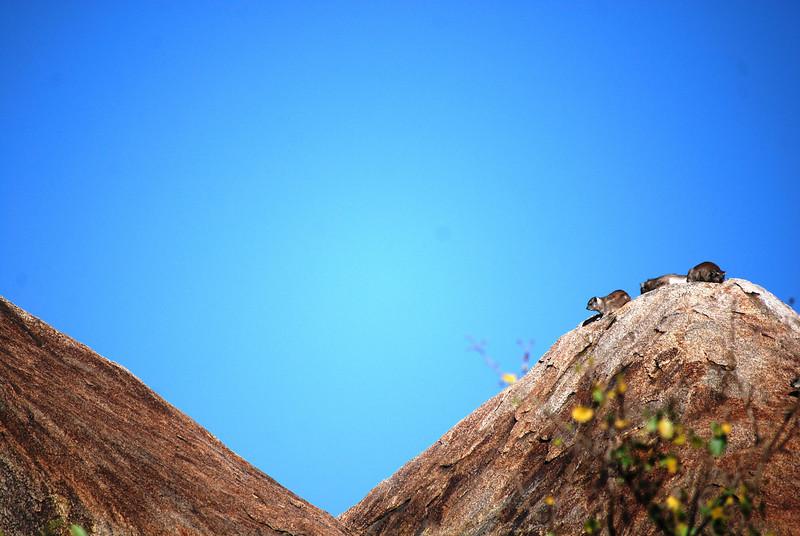 Serengeti (121).JPG