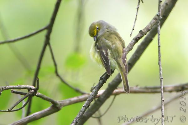 2014-05-17 Castlewood State Park