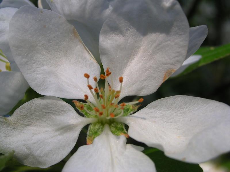 white bloom 20.JPG