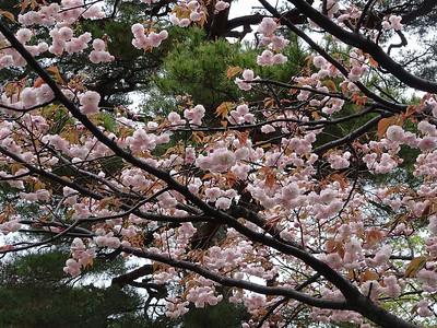 Late Spring in Japan, April 2019