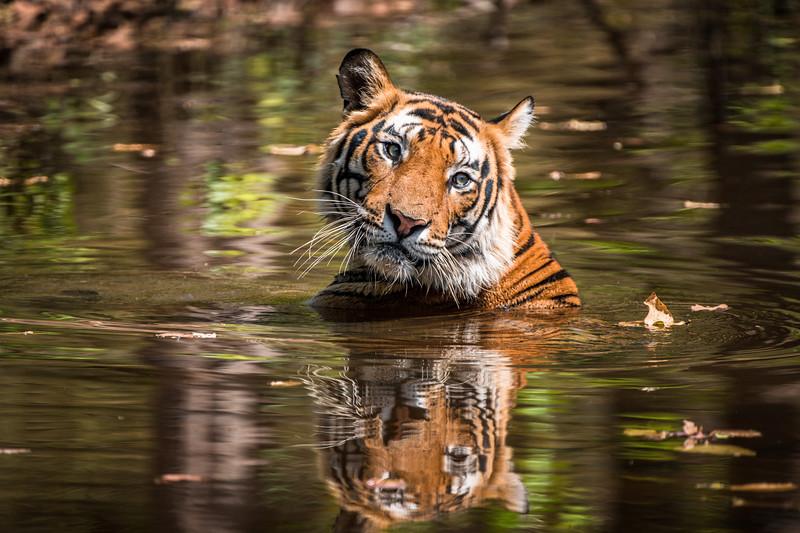 India_April_2019-1097.jpg