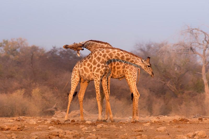 love jirafes.jpg