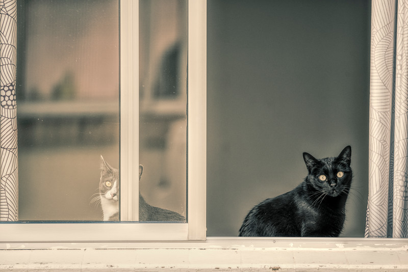 Couple of cats looking out a window