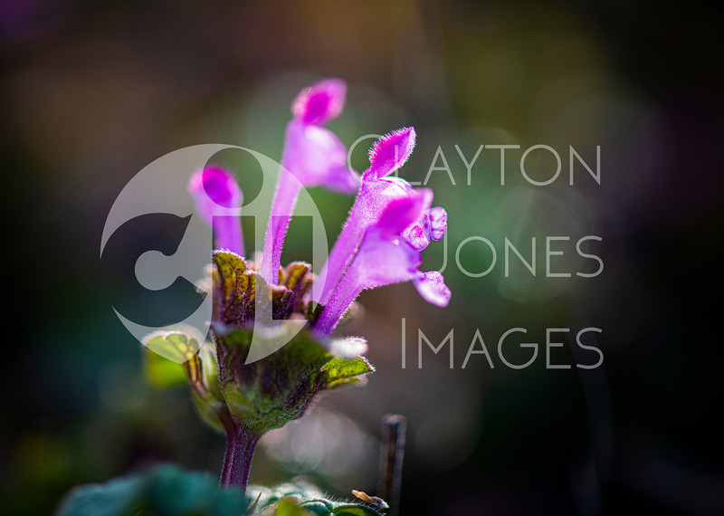 wf_backyard_flowers_3.jpg