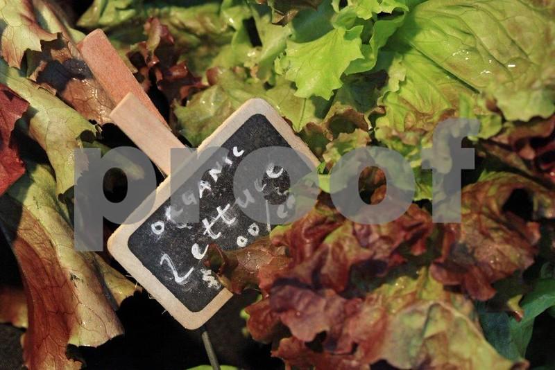 Organic lettuce 8651.jpg