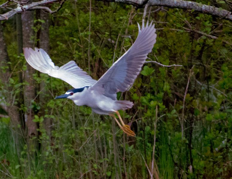 19-Sept North America Birds-3160.JPG