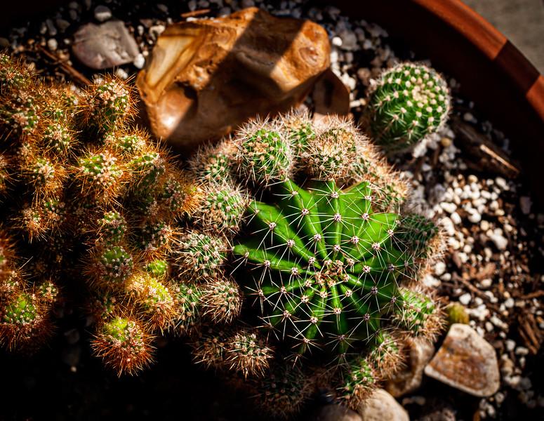 Cacti-9314.jpg