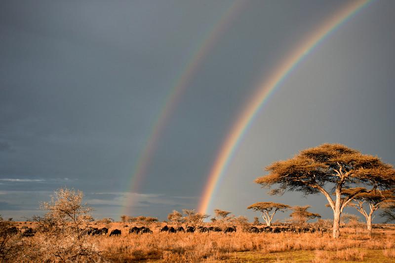 Serengeti_12_2013_Rainbow_serengeti.jpg