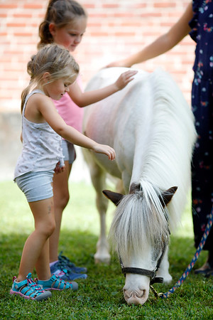 Therapy horses visit West Stockbridge Library-080919