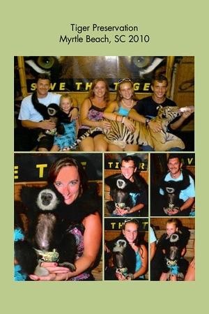 SC, Myrtle Beach - Tiger Presevation
