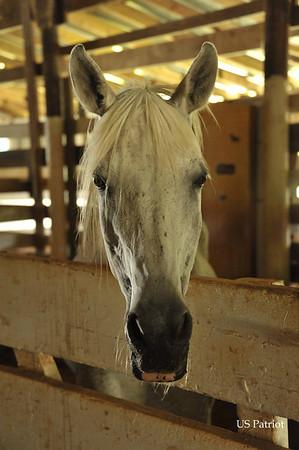Sylvia Kremer's Horses