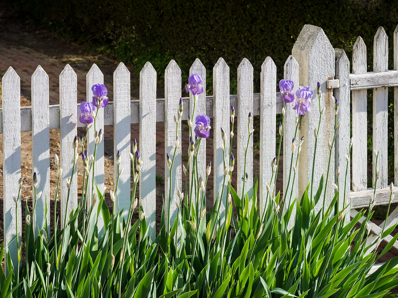 Colonial Williamsburg White Picket Fence Scene