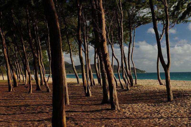 2012_Oahu_August_  0004.JPG