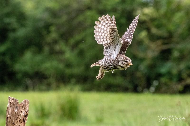The Little Owl Shoot-6803.jpg