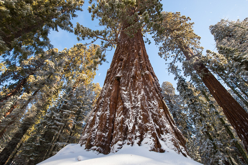 Giant Sequoia-6889.jpg
