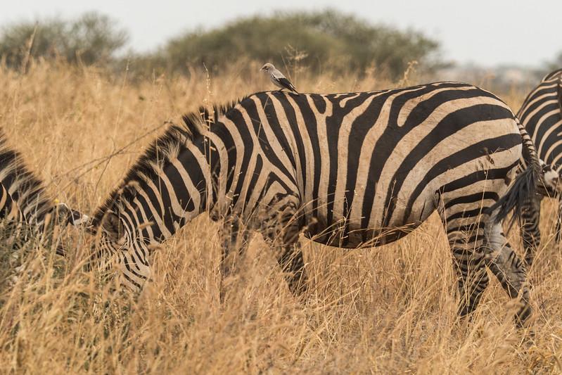 Tanzania_Safari-best-13.jpg
