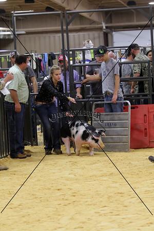 Swine 5