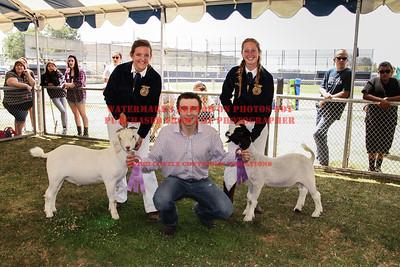 2014 LHVCF Goats