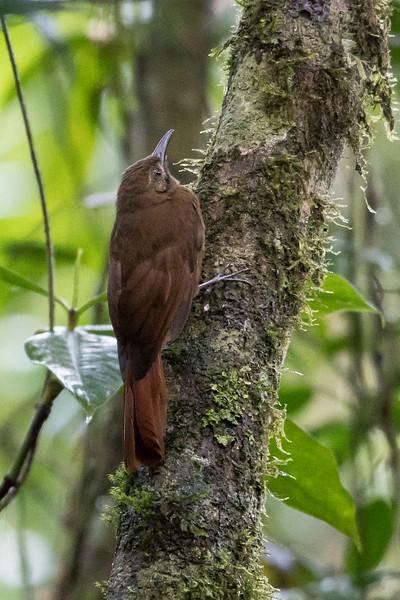 19-Sept Costa Rica Birds-0846.JPG