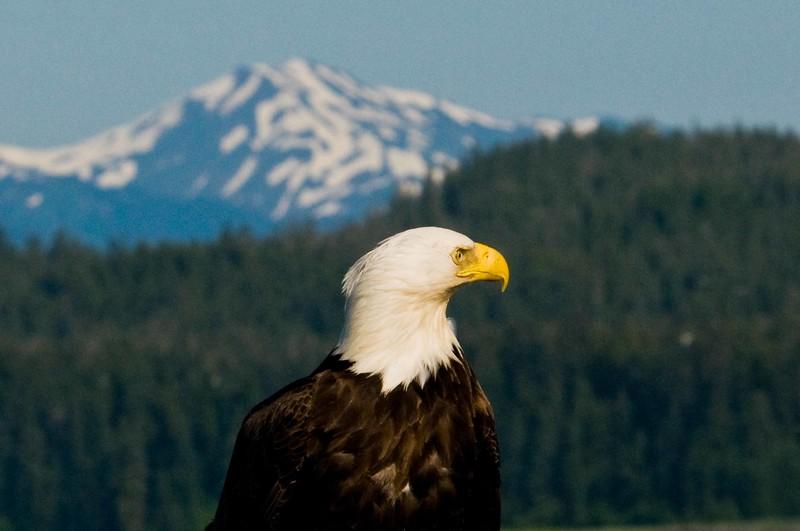 Copy of Eagle3.jpg